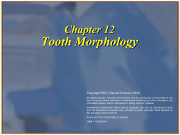 Chapter 12  Tooth Morphology  Copyright 2003, Elsevier Science (USA). All rights reserved. No part of this product may be reproduced or transmitted in.