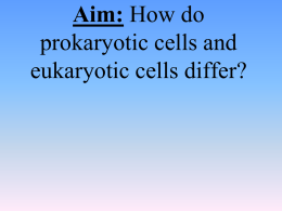 Aim: How do prokaryotic cells and eukaryotic cells differ? The Cell Theory The cell theory states:  All living things are made of cells.