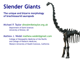 Slender Giants The unique and bizarre morphology of brachiosaurid sauropods Michael P. Taylor dino@miketaylor.org.uk Department of Earth Sciences University of Bristol, UK  Mathew J.