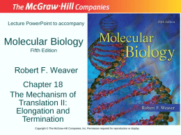 Lecture PowerPoint to accompany  Molecular Biology Fifth Edition  Robert F. Weaver Chapter 18 The Mechanism of Translation II: Elongation and Termination Copyright © The McGraw-Hill Companies, Inc.