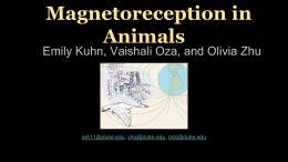Magnetoreception in Animals  Emily Kuhn, Vaishali Oza, and Olivia Zhu  erk11@duke.edu, vho@duke.edu, odz@duke.edu.