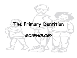 The Primary Dentition MORPHOLOGY