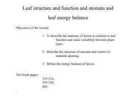 Leaf structure and function and stomata and leaf energy balance