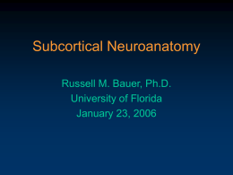 Subcortical Neuroanatomy Russell M. Bauer, Ph.D. University of Florida January 23, 2006