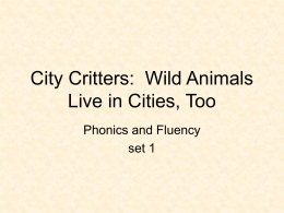 City Critters:  Wild Animals Live in Cities, Too Phonics and Fluency