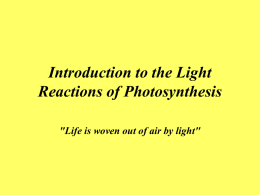 Introduction to the Light Reactions of Photosynthesis