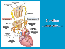 Cardian innervation:
