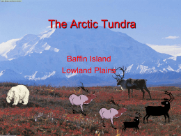 The Arctic Tundra Baffin Island Lowland Plains