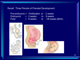 Recall:  Three Periods of Prenatal Development: