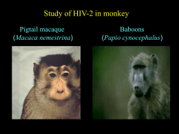 Study of HIV-2 in monkey Pigtail macaque Baboons Macaca nemestrina