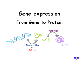 Gene expression From Gene to Protein DNA RNA