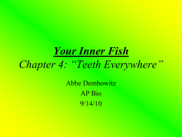 "Your Inner Fish Chapter 4: ""Teeth Everywhere"" Abbe Dembowitz AP Bio"