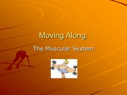 Moving Along: The Muscular System