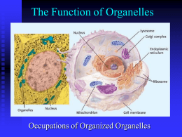 The Function of Organelles Occupations of Organized Organelles