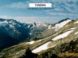 TUNDRA The World's Youngest Biome