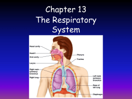 Survey of A P/Chapter 13 Respiratory System.pptx