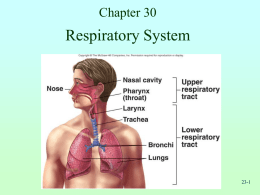 Chapter 30 notes: The Respiratory System